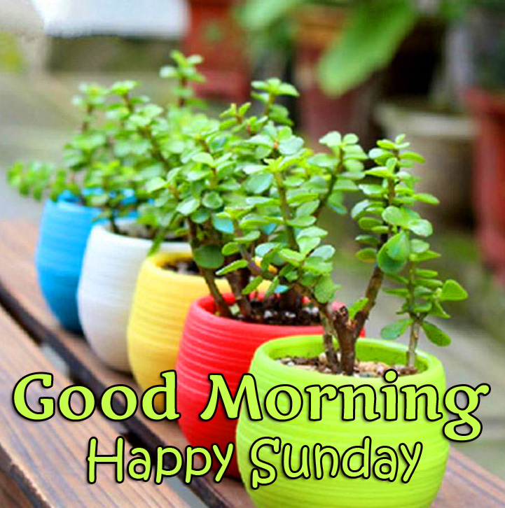 Good Morning Happy Sunday Flowers Picture