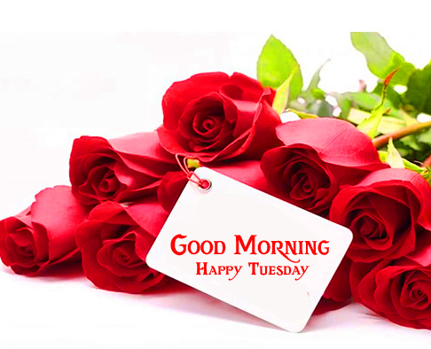 Good Morning Happy Tuesday Card with Roses