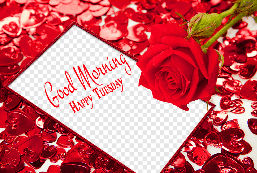 Good Morning Happy Tuesday Hearts and Rose Image