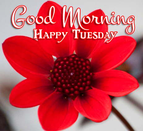 Good Morning Happy Tuesday Red Flower Photo