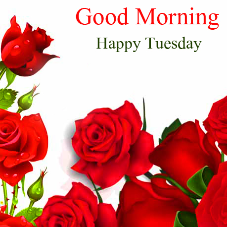 Good Morning Happy Tuesday Roses Romantic Image