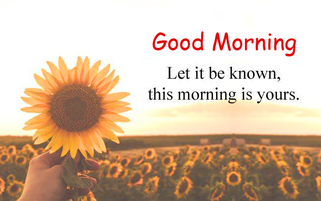 Good Morning Quote Sunflower Picture