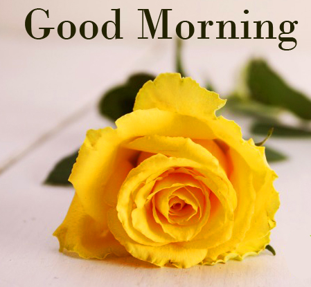 Good Morning Yellow Rose Picture
