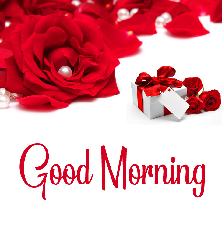 HD Rose Good Morning Picture