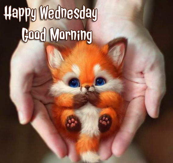 Happy Wednesday Good Morning Cute Pic