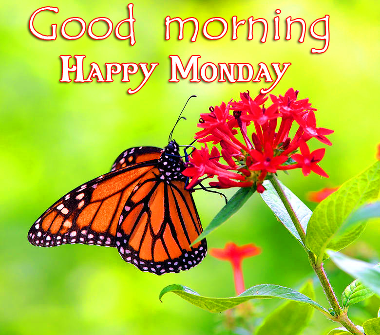 Latest Butterfly Good Morning Happy Monday Image