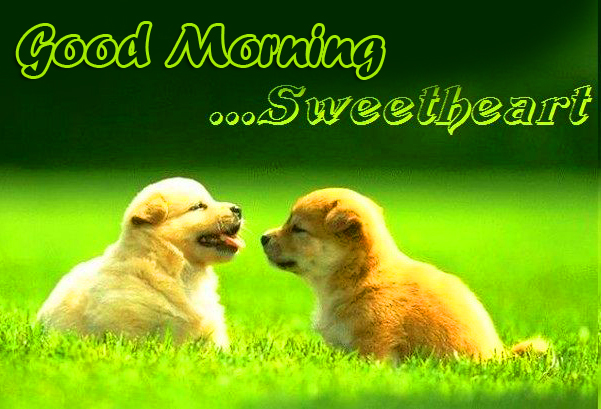 Latest Cute Puppies Good Morning Image