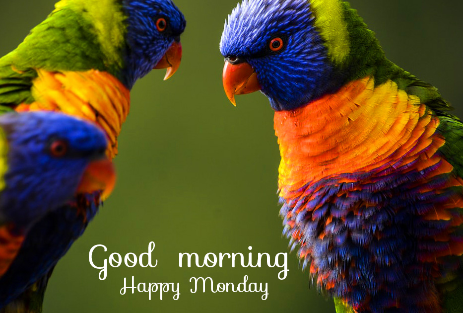 Latest Love Birds Good Morning Happy Monday Image