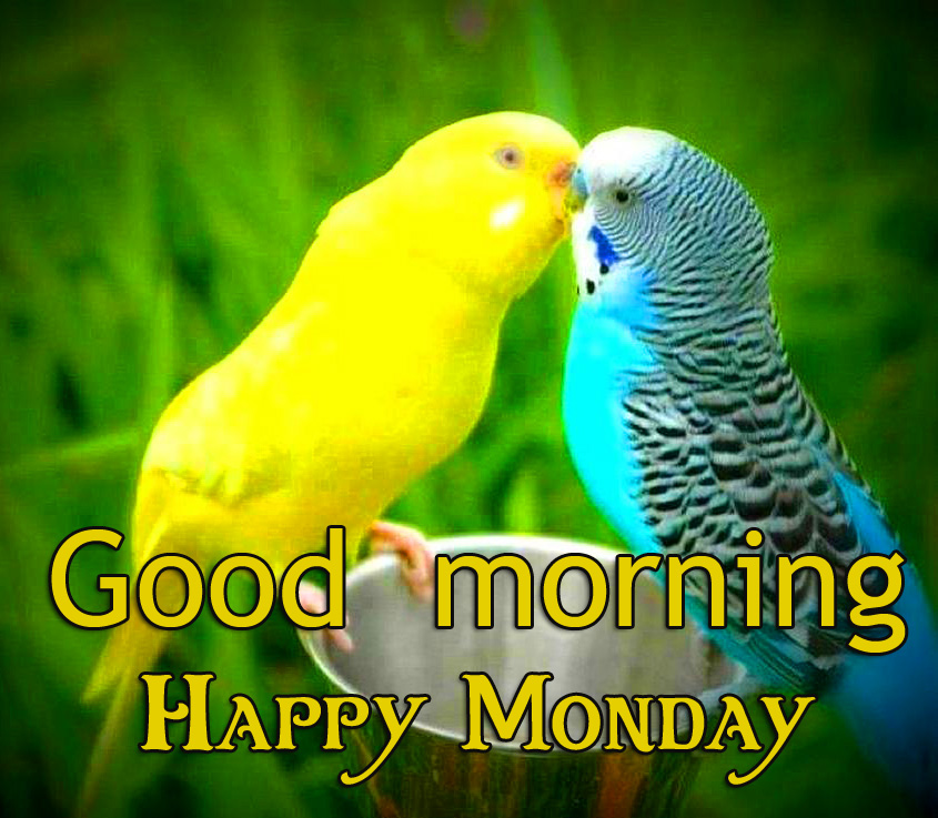 Love Birds Good Morning Happy Monday Picture