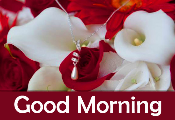 Love Roses Good Morning Image Copy