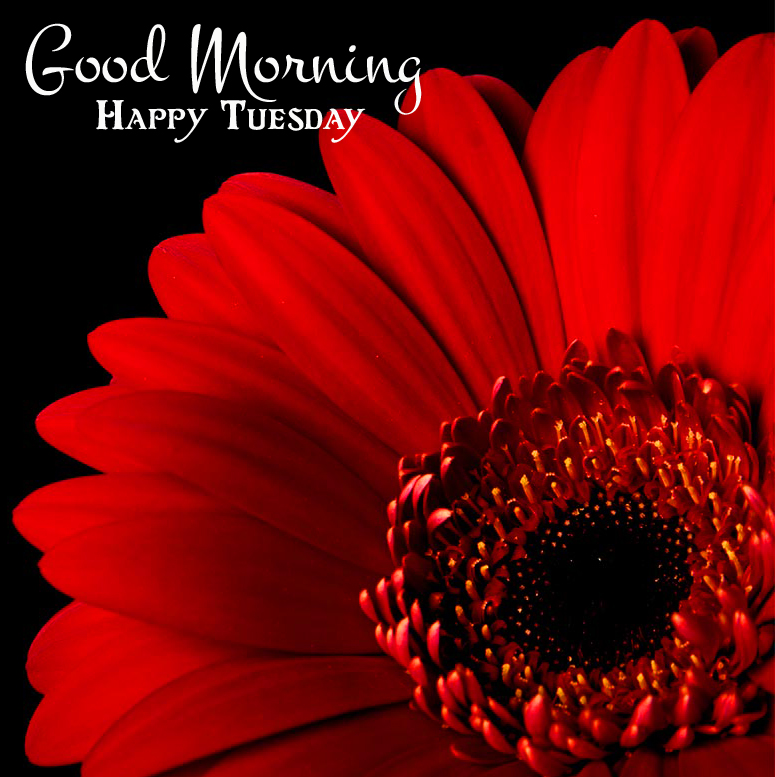 Lovely Red Flower Good Morning Happy Tuesday Image