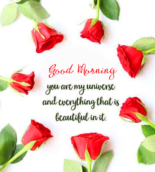 Lovely Roses with Good Morning