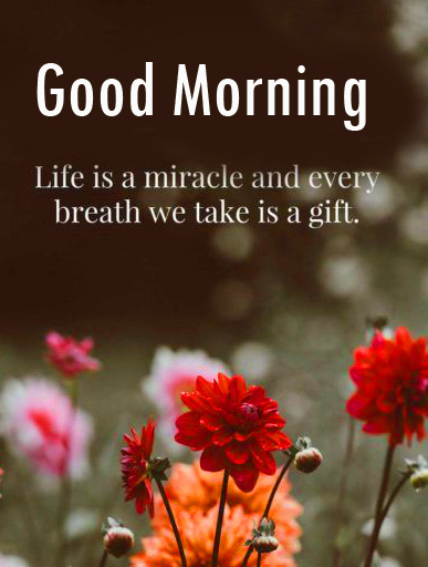 Miracle Life Quote Good Morning Image
