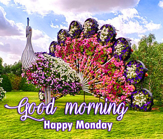 Miraculous Flowers Architect with Good Morning Happy Monday Wish
