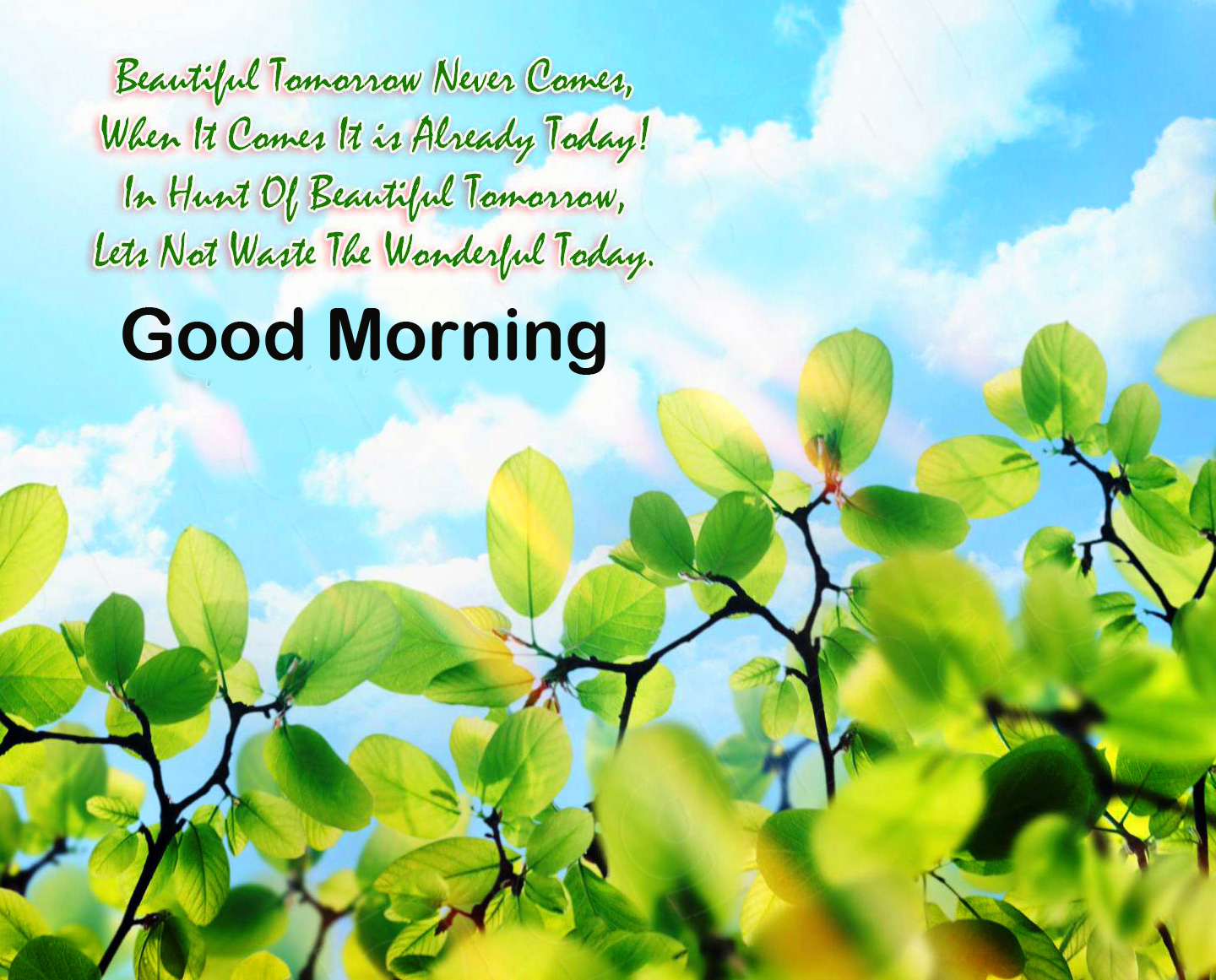 Nature Beautiful Quote Good Morning Image HD