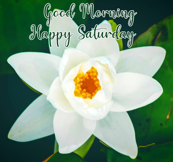 Nature Flower Good Morning Happy Saturday Pic