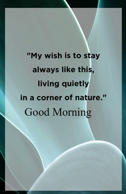 Nature Quote Good Morning Photo