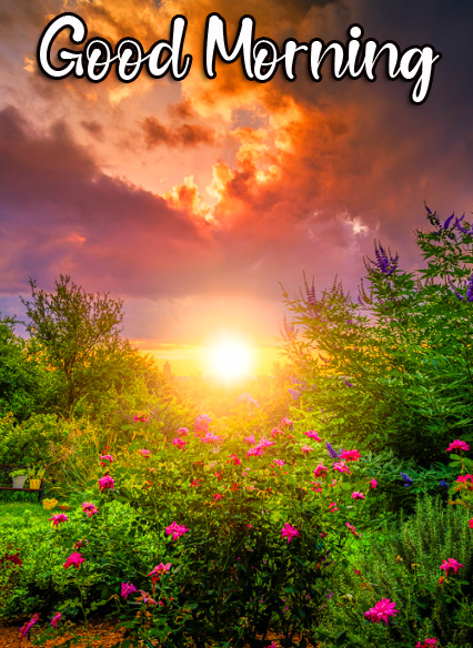 Nature Sunrise Good Morning Image HD