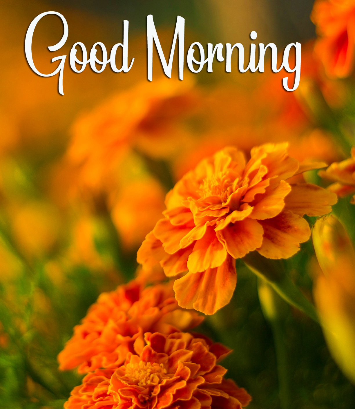 Orange Flowers Good Morning Image