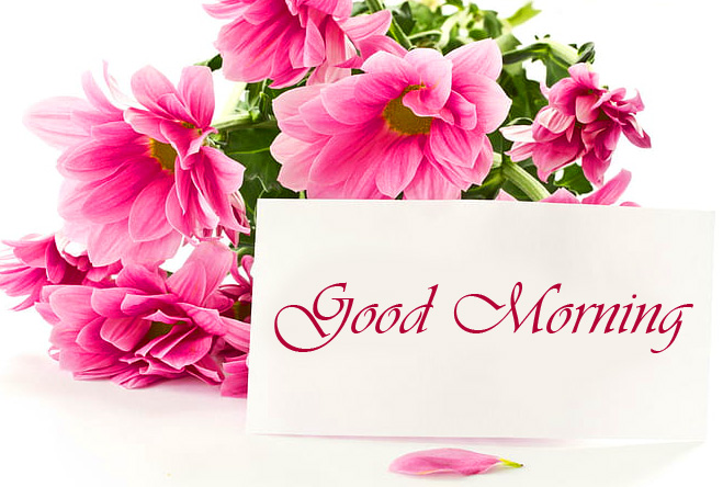 Pink Flower With Card Good Morning Image