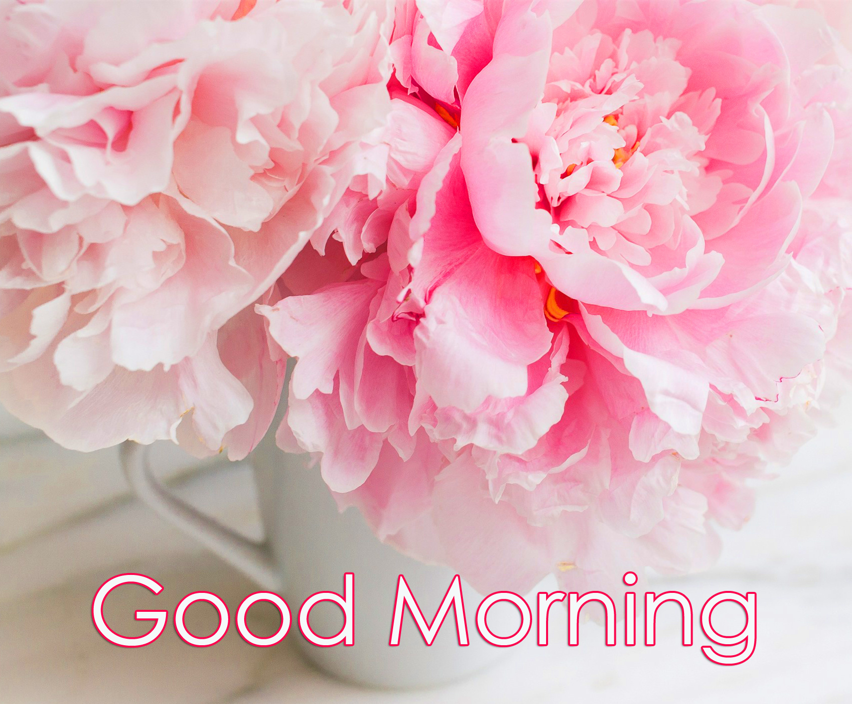 Pink Peonies Cup Flower Good Morning