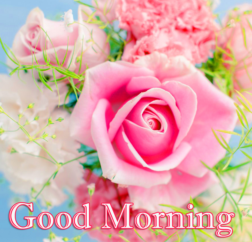 Pink Rose Beautiful Flowers Good Morning Image