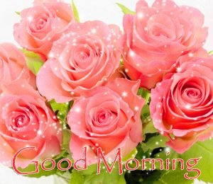 Pink Rose Pictures Bouquet Good Morning Picture