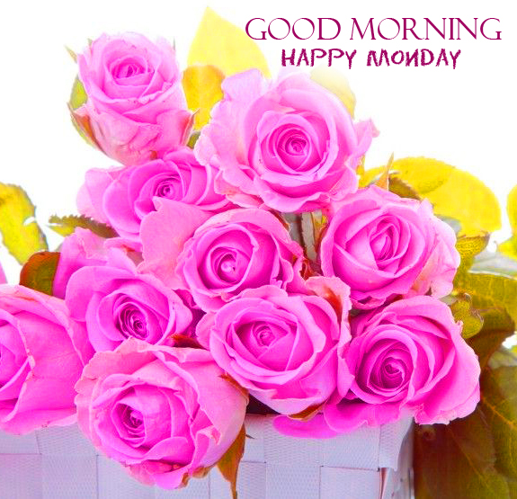 Pink Roses Good Morning Happy Monday HD Pic