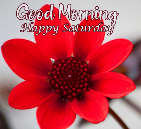 Red Flower Good Morning Happy Saturday Pic