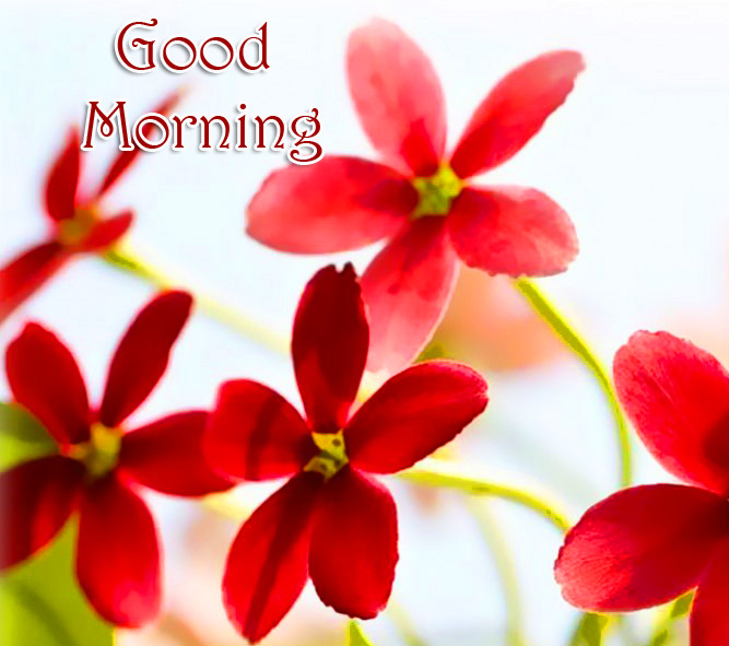 Red Flowers Good Morning Picture HD