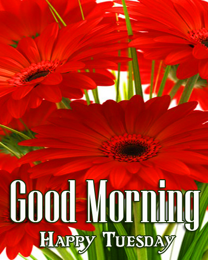 Red Gerbera Flower Good Morning Happy Tuesday Image