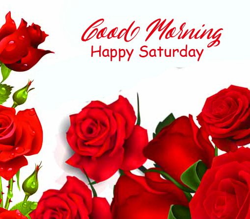 Red Rose Good Morning Happy Saturday Pic