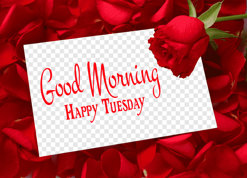 Roses Good Morning Happy Tuesday Card Image