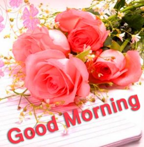 Roses Good Morning Images