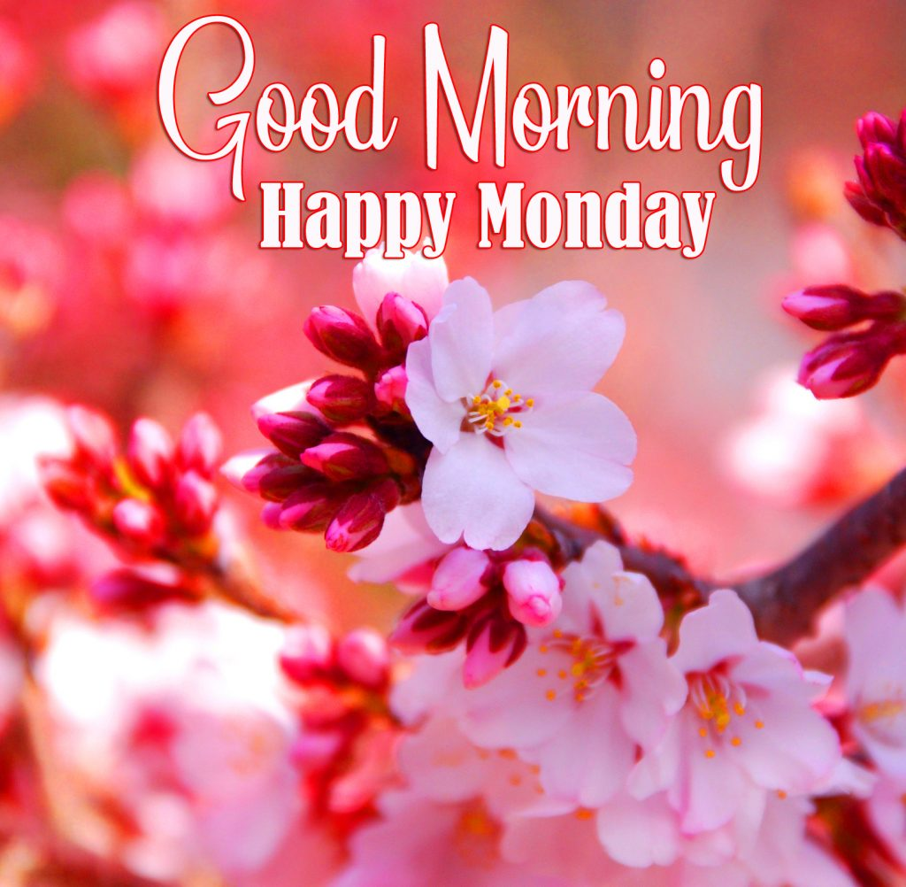 48+ Good Morning Monday Images