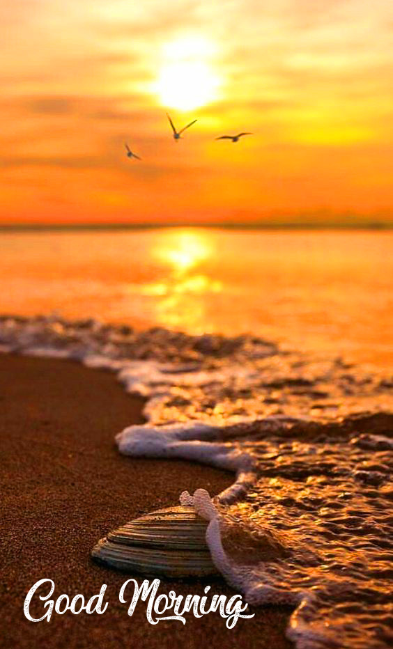 Sea Shore Good Morning Sunrise Wallpaper