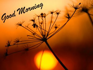 Sunrise HD Good Morning Wallpaper and Pic