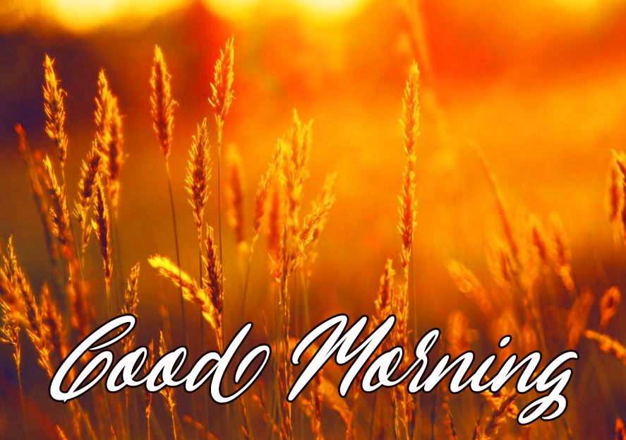 Sweet Sunrise Good Morning HD Image