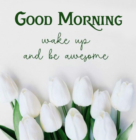 Tulips with Quote and Good Morning Wish