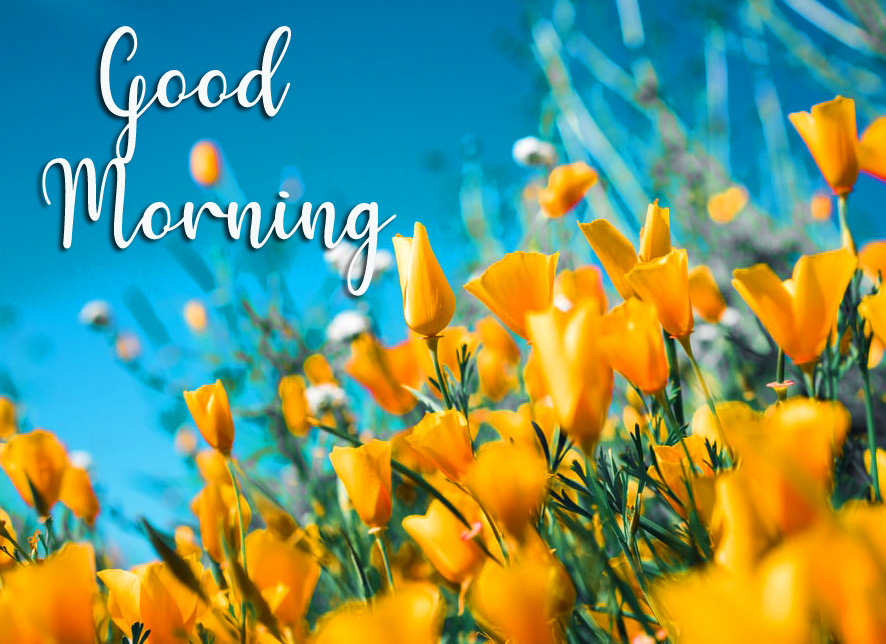 Yellow Good Morning Wallpaper HD
