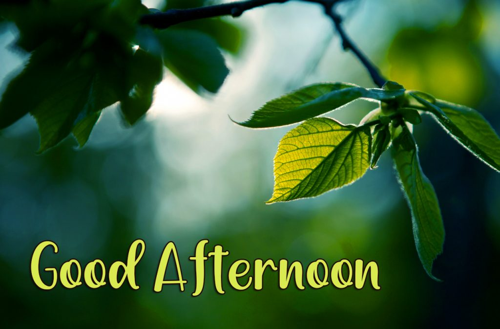 45+ Good Afternoon Beautiful Images