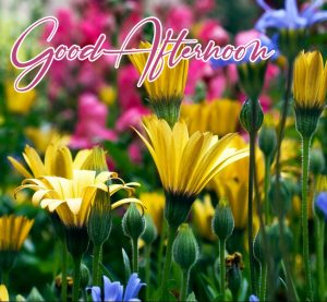 Beautiful Good Afternoon Image HD Wallpapers Download