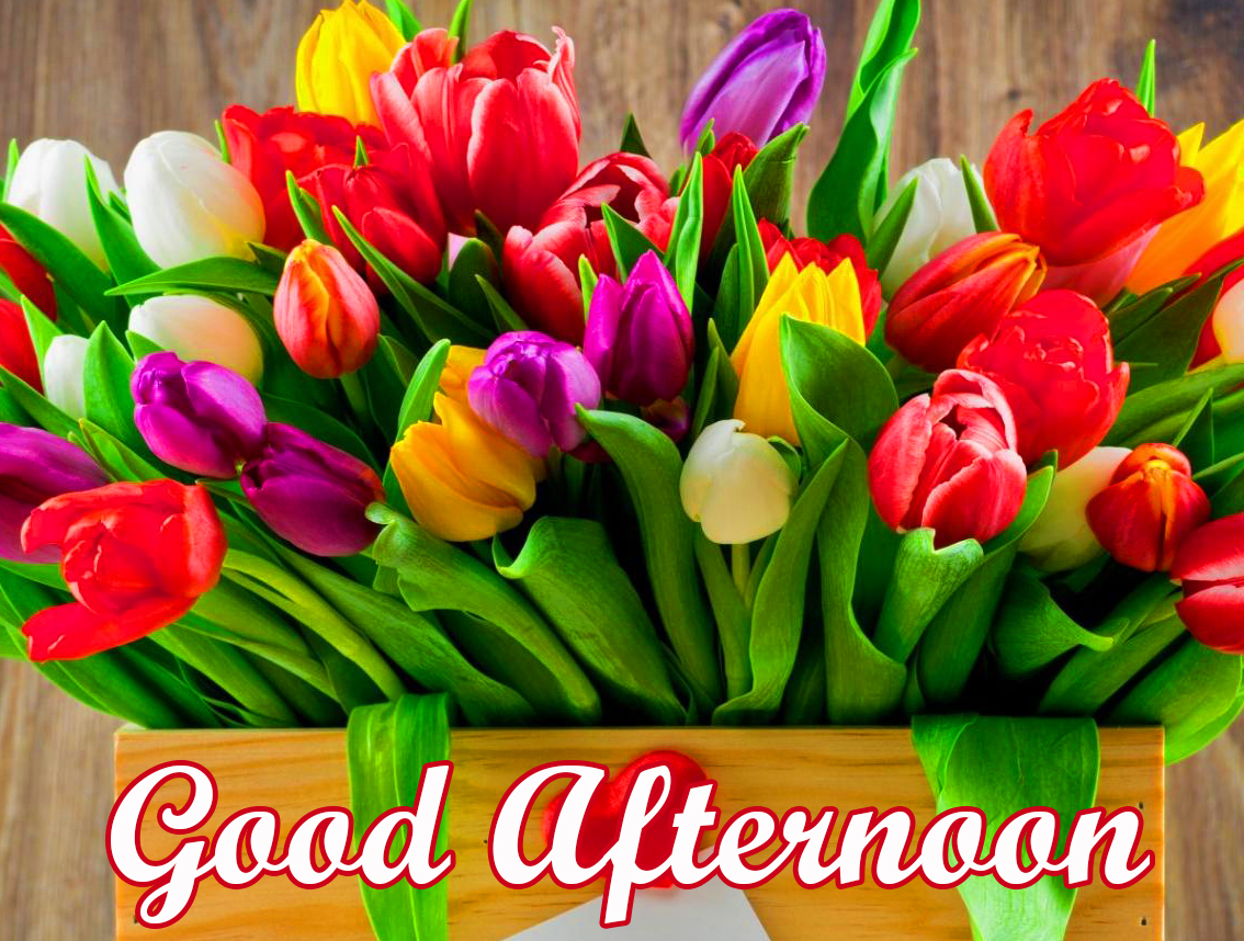 Bunch of Colorful Tulips Good Afternoon Image Wallpaper
