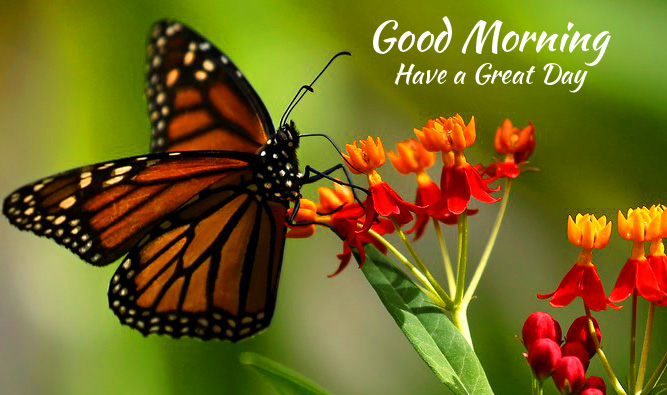 Butterfly and Flowers Good Morning Have a Great Day Image