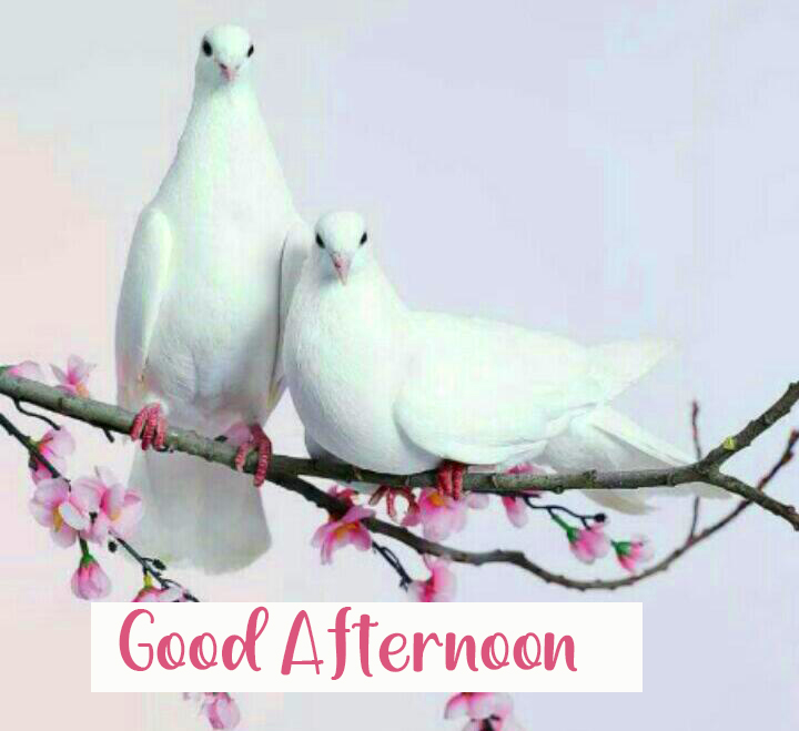 Couple Bird Good Afternoon Image