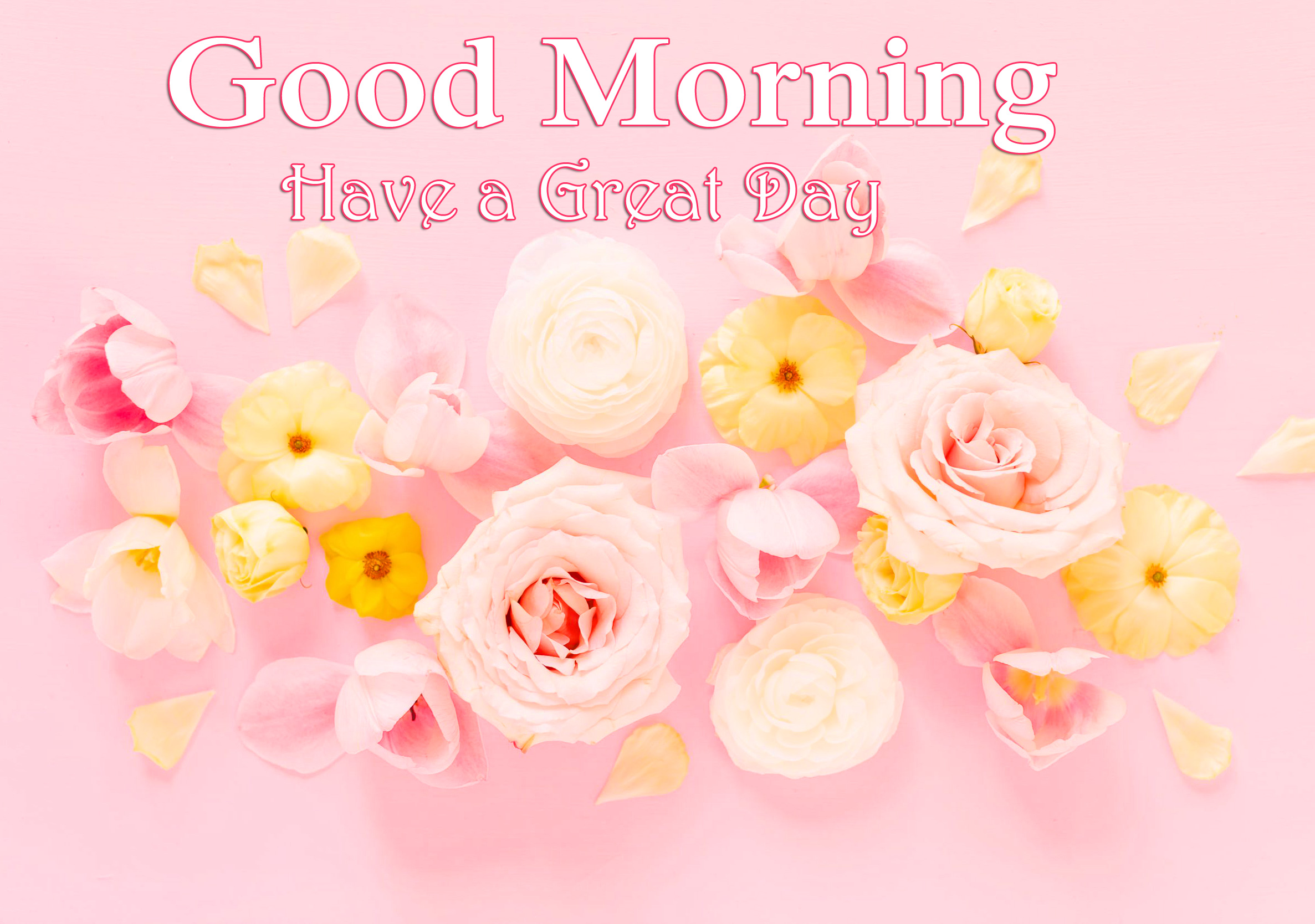 Flowers Pink Good Morning Have a Great Day Wallpaper