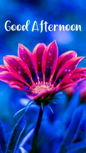 Good Afternoon Flower Image HD