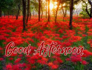 Good Afternoon Red Flowers Sunshine Image