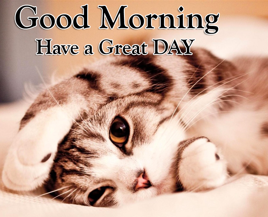 Good Morning Have a Great Day Cute Cat Wallpaper