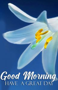 Good Morning Have a Great Day Flower Wallpaper